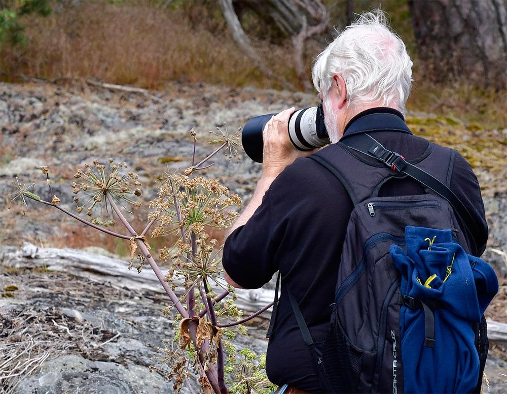 Mats Hjelte fotograferar Makaonfjärilslarver